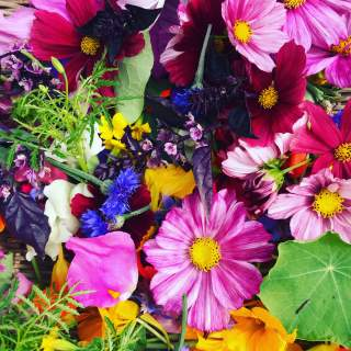 GMF - Edible Flowers / 3oz
